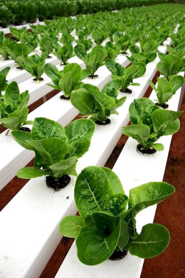 18 Finest Hydroponic Garden Ideas To Decorate Your House 02